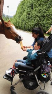 imagen alimentando a un caballo